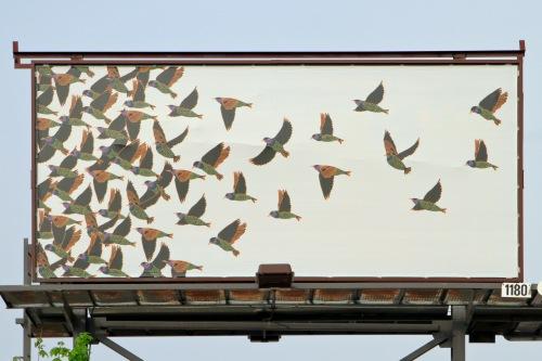 Calder Kamin Billboard_11