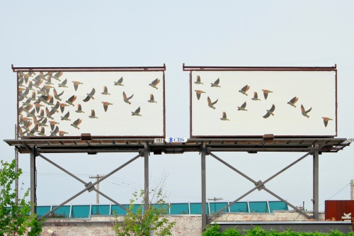 Calder Kamin Billboard_7