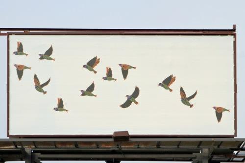 Calder Kamin Billboard_9